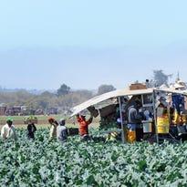 Investiga Departamento de Salud del condado seguridad de alimentos para trabajadores del campo