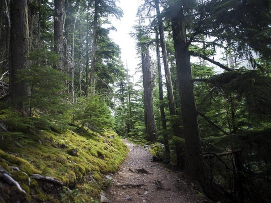 Avalanche Lake Trail leads through Glacier National
