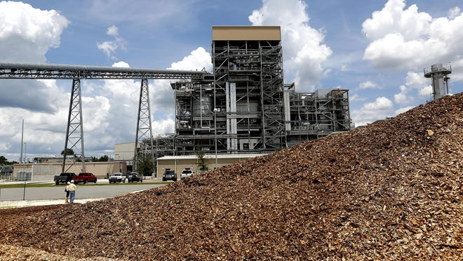 Wood used for fuel is piled up next to the Gainesville Renewable Energy Center on June 29, 2016 in Gainesville.