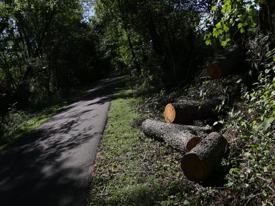 Trees  blown down by a storm last week sit chopped up by volunteers working on the Richland B&O Trail in Lexington.