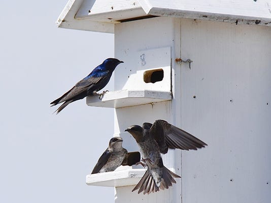 636632809225037787-marsi-birds.jpg