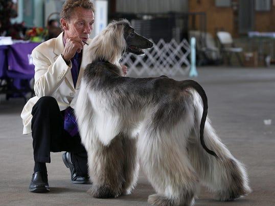 -MNI 0815 dogshow 03.jpg_20130815.jpg