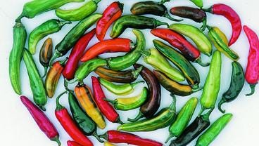 Fish peppers come in an array of colors and may have gotten their name from their use as a seafood seasoning.