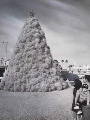 Chandler's tumbleweed tree  is admired by a family on December 16, 1970.