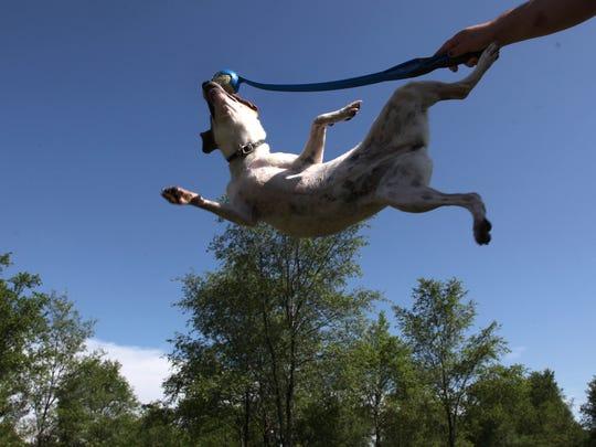 Maya plays at the Raccoon River dog Park in 2009. Waukee