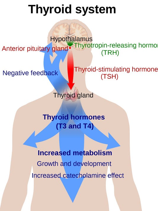 Thyroid Nodules Have Many Causes
