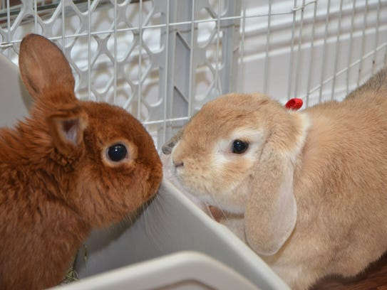 Bunfest is the perfect event to learn about rabbits