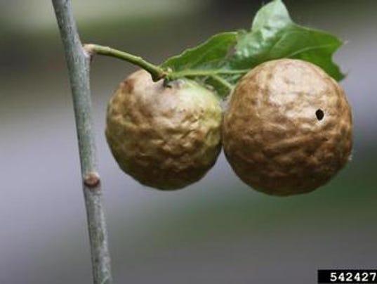 635787861213444756-Autumn-apples