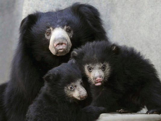AP BROOKFIELD ZOO SLOTH BEARS CUBS A FEA USA IL