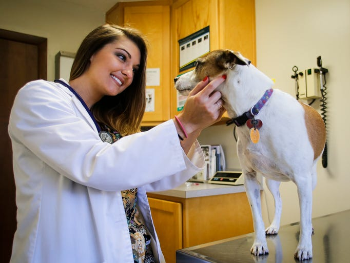 "Dr. Hailee Cotter, DVM, gets to know ""Jack,"" a nine-year-old"
