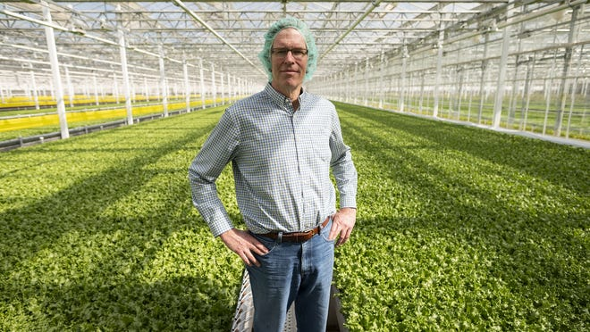 CEO and founder Paul Sellew in the greenhouse at Little Leaf Farms on Thursday.