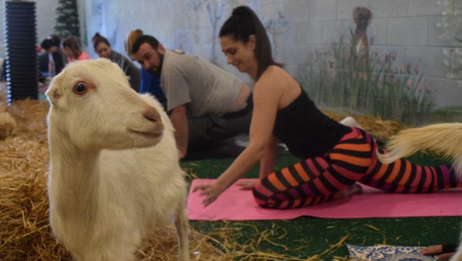 Pampered Pup Luxury Pet Resort in Millville hosted Barnyard Yoga on Saturday, March 11. The next class is scheduled for 1 p.m. Saturday, March 25. Cost is $30. Call 856-327-3880.