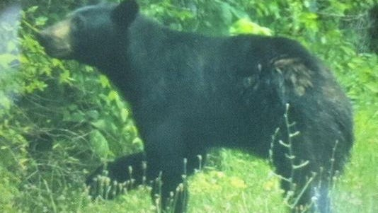 A photo of a black bear reported on the loose in Clermont County earlier this week.