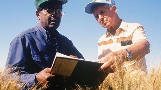 Sanjaya Rajaram and Norman Borlaug work on wheat varieties in this undated photo.
