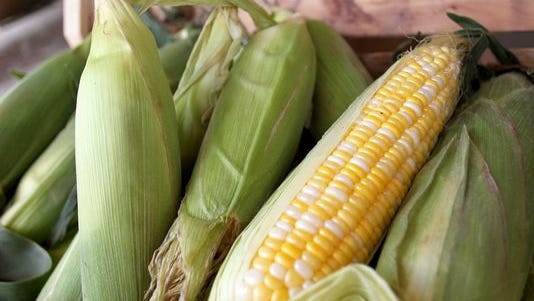 Cool temperatures this spring delayed the sweet corn crop a bit, growers said, but the corn will still hit farmers markets and stands earlier than it did last year.