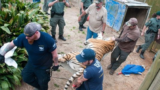 Rowdy Shaw and Adam Parascondola with The Humane Society of the United States carry one of the sedated female tigers from her cage to a transport carrier in this January 2012 file photo.