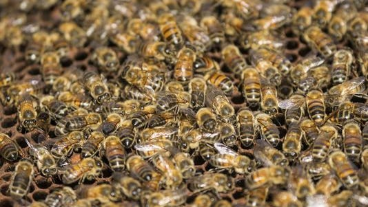 Stock image of bees