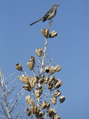A bird sits on an agave bloom along the Brown's Ranch