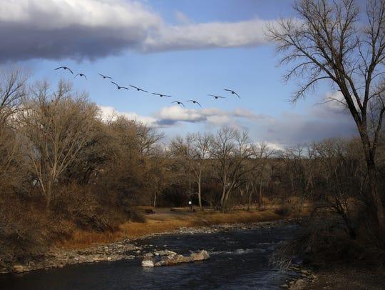 A flock of Canada geese flies over the Animas River Tuesday in Berg Park in Farmington.