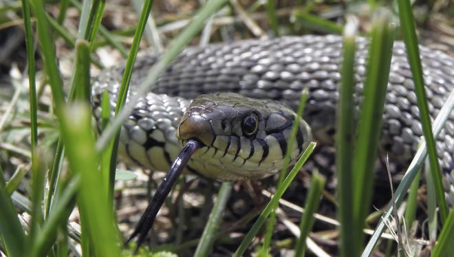 If a snake bites you, take a photo of it with your cellphone if you can so medical staff can identify whether it was a poisonous snake or not.