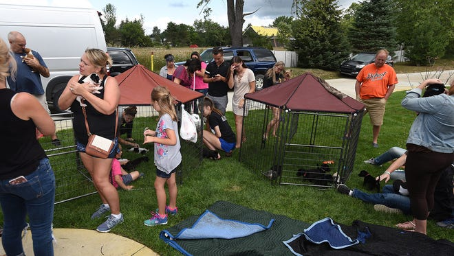 The Milford Township home of Kevin and Nicole King welcomes visitors on Aug. 12 as they introduce them to potential puppies and some adult dogs for adoption.
