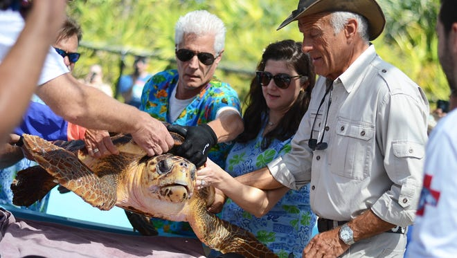 Solana, the sea turtle, prepares for her release in Juno Beach recently, as Jack Hanna, a zoologist well-known for his Jack Hanna's Animal Adventures program on TV, assists.