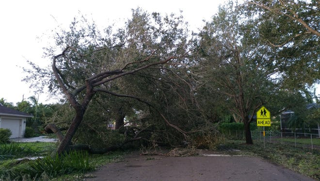 Trees are down at the entrance to Three Oaks Elementary School.