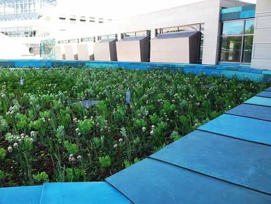 Green roof 3.jpg