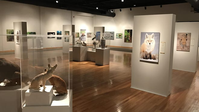 The Nature's Best Photography exhibit gathers 50 large-scale images of nature scenes.
