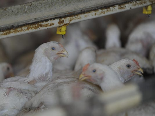 -JD-ChickenHeatWave-1695.jpg_20120706.jpg
