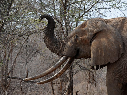 AFP FILES-SPECIES-CITES-UN-ELEPHANTS I EPT KEN -