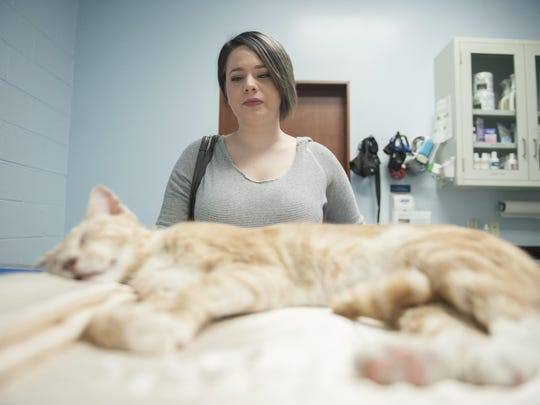 The Gloucester County Animal Shelter put Stephanie Radlinger's cat, Moe, down hours after he was found.