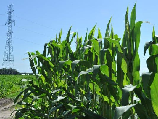 US-ECONOMY-FARM-LIVESTOCK-ELECTRICITY-CLIMATE