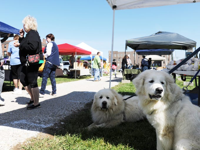 FILE - Junior, (right) a new recruit at Bears Bone Bakery, learns the ropes with his brother Bear (center)  as they sell homemade dog treats at the Downtown Farmer's Market at the corner of Second and Sycamore streets in Evansville in 2015.
