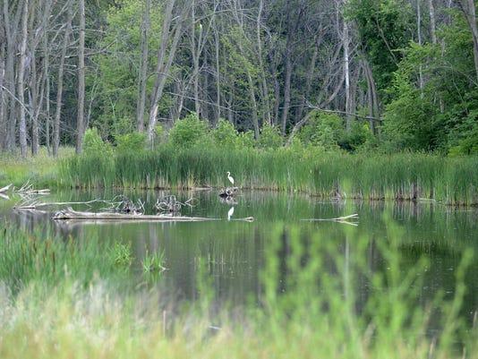 Wetlands-FILE-2