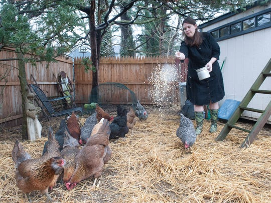 Woodbury resident Jessica Ferguson feeds the chickens recently in the backyard of her home. Council must decide if it wants to grant Ferguson, who owns 14 chickens, a use variance for her property or amend its city ordinance to allow it for everyone.