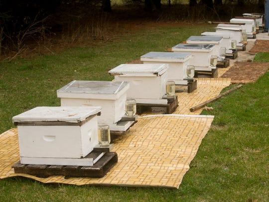 FON 041015 bees 7.jpg