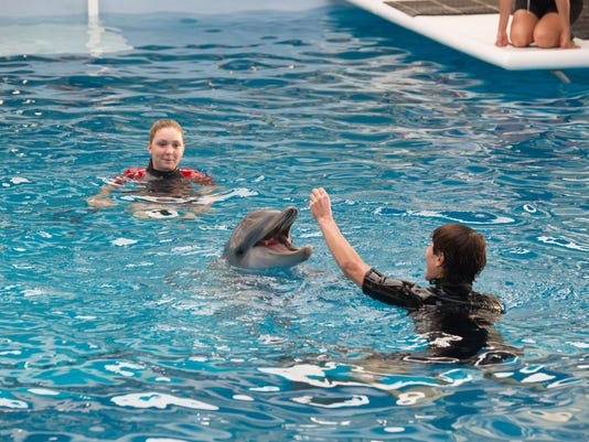 Film Review-Dolphin Tale 2