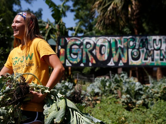 Melanie Marques, an FSU urban and regional planning graduate degree student and volunteer coordinator at IGrow farm, works with volunteers Monday to pull collard greens from the vegetable beds.