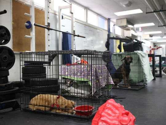 Pets brought to the Red Cross emergency shelter at