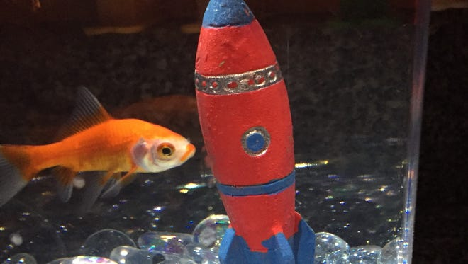 Sawyer and Tatum named the fish Heath Ledger after the actor's character the Joker in the Batman movie because of what looks like poorly applied lipstick around his mouth.