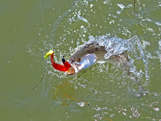 Darnell-trout-splash.jpg