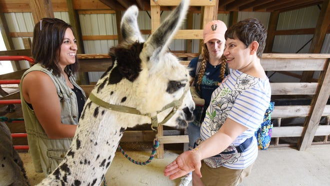 Valerie Braucher smiles after feeding a llama at Camp Echoing Hills. With her is volunteer Kate Burrall, of Mount Airy Maryland, and Camp Director Lauren Unger, left. The camp is celebrating its 50th anniversary this year.