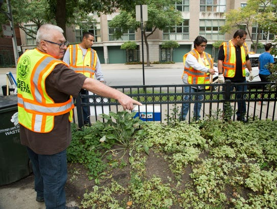 Workers in Chicago identify burrows and use dry ice to exterminate rats.