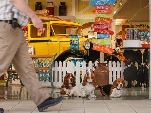 From left, Bassett hounds Dudley, 3, Stewart, 2, and