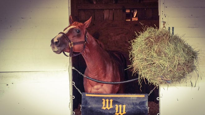 Pablo Del Monte arrived to his barn at Churchill Downs on Wednesday