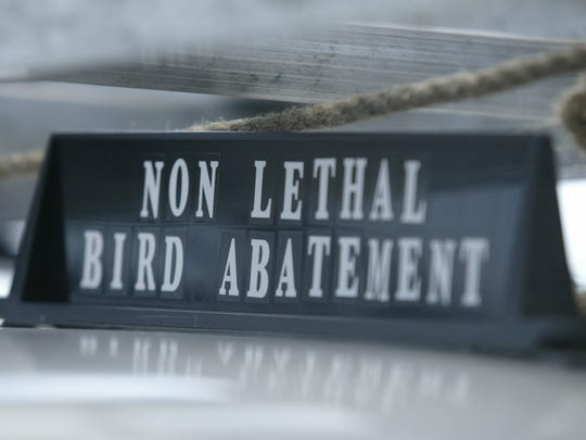 Jeff Schukow's avian pest business focuses on non-lethal