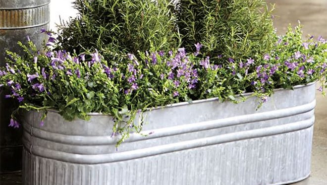 Galvanized containers like this can be used to create water gardens.