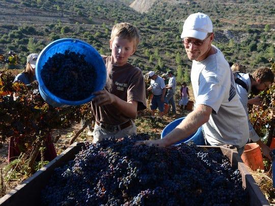 SETTLER FARMING GrapeHarvest13