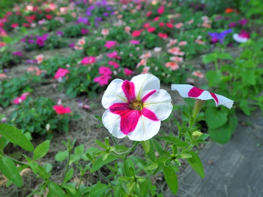 WDH 0711 Garden of the Month 4.JPG